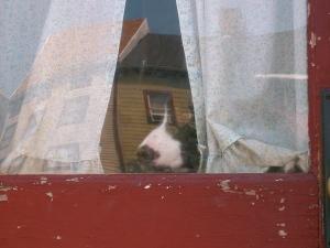 dunkin at door