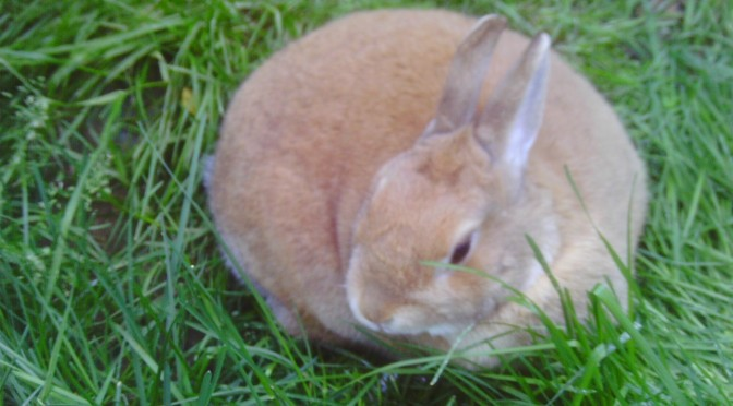 Writing Wins and Woes: In Honor of Bunnies